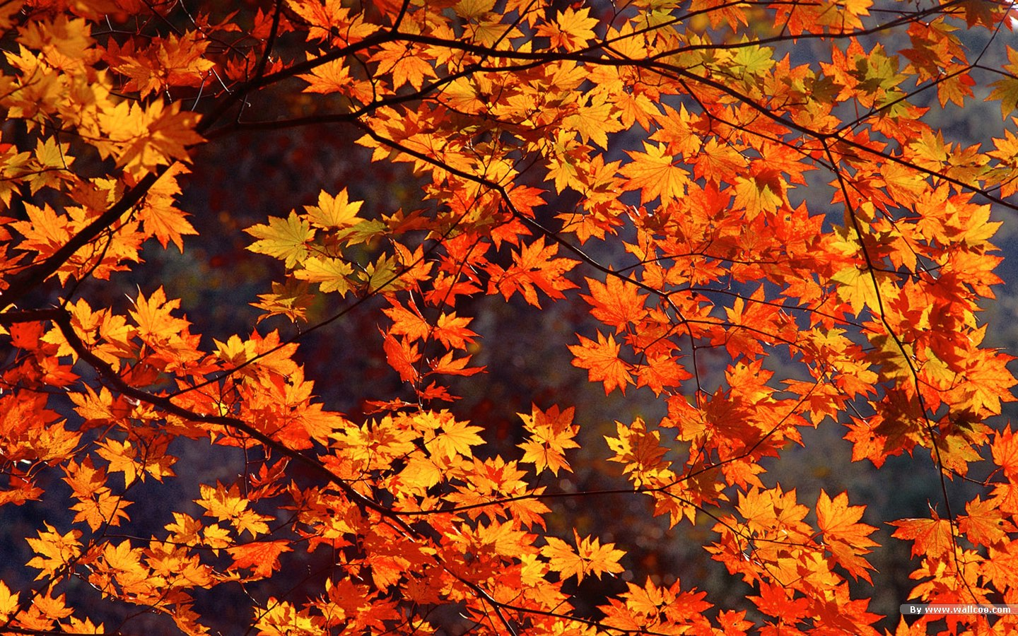 autumn desktop wide wallpaper mega wallpapers