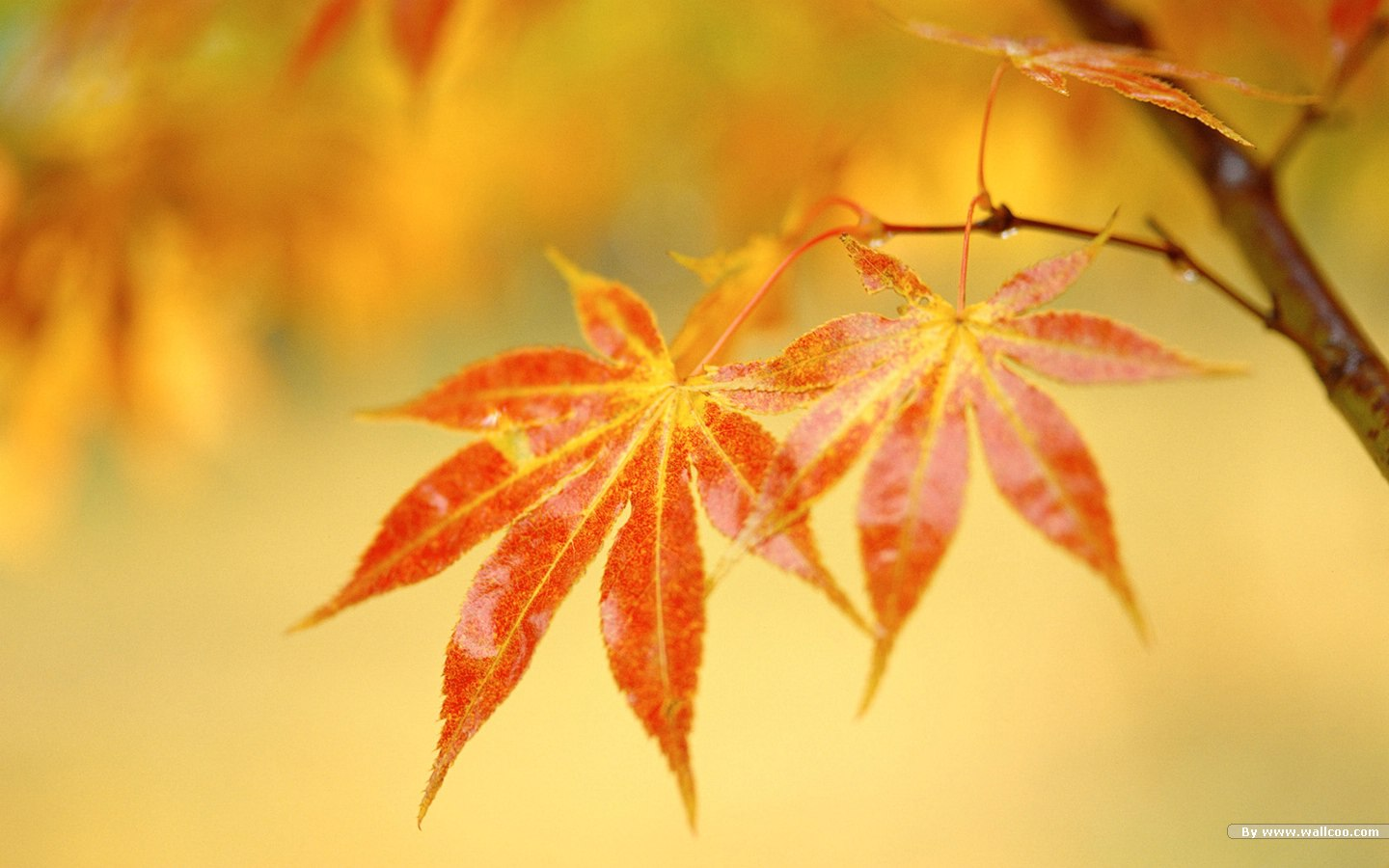 Leaves Background Wallpaper Leaves Background Autumn