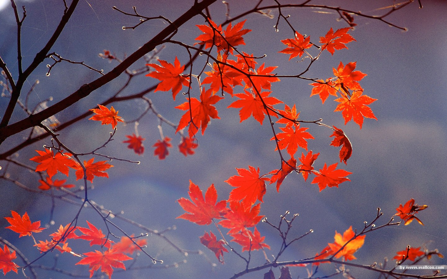autumn tints - beautiful fall leaves widescreen wallpapers 1440x900