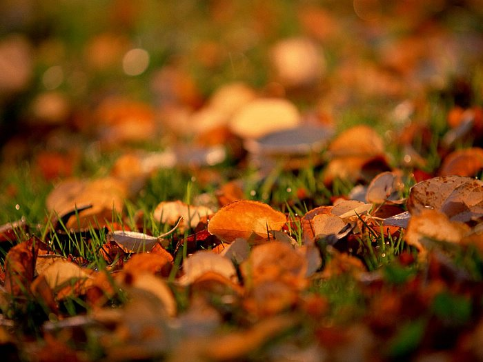 Photo Fallen Leaves On Grass Soft Focus 2 Wallcoo Net