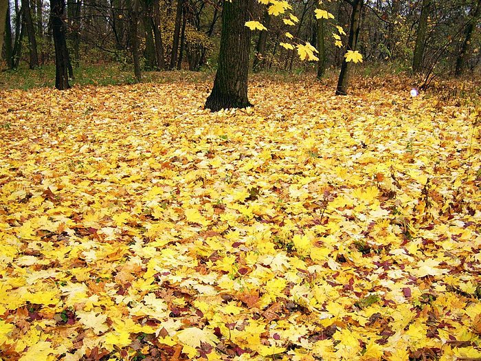 Photo: Autumn Park - Fallen Leaves Covered Park 23 - Wallcoo.