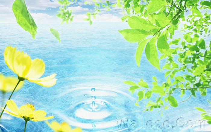 Eco Concept and Photo Manipulation of Environment and Nature - Eco Concept Pictures - Green Leaves and drop of water2