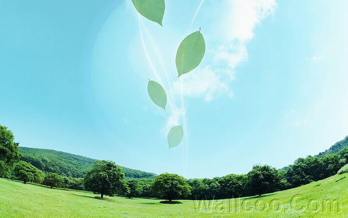 Eco Concept and Photo Manipulation of Environment and Nature - Dreamy Summer - Leaves floating in  Blue sky, dreamy grassland4