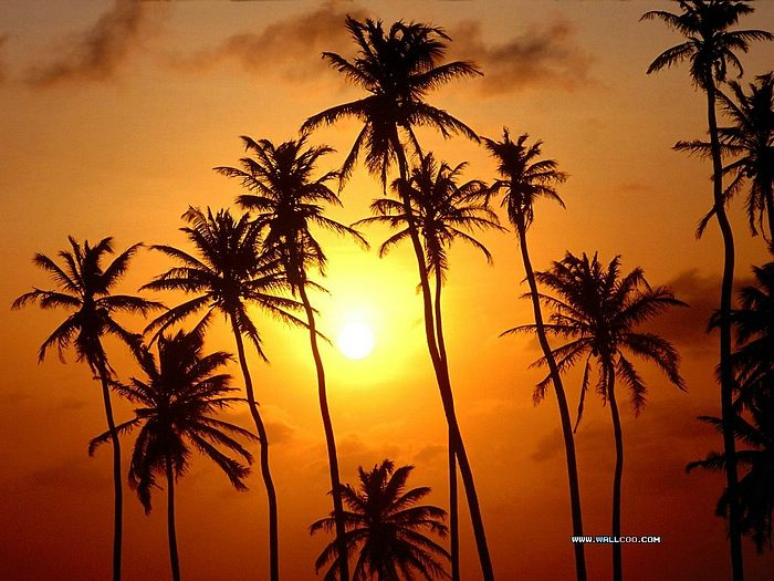 Sunsets On The Beach With Palm Trees Tropical Islands Wallpapers Golden Sunset Wallpaper U0026