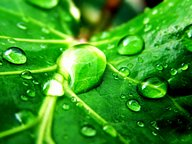 Vista Plants and Leaves series (Vol.11)31 pics