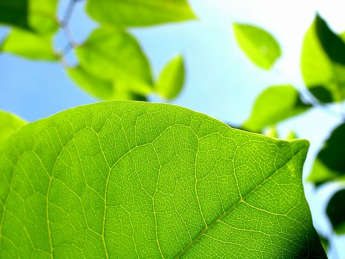 Windows vista plants leaves photography vol 13 green leaf closeup