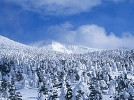 Beautiful Snowy Forest (Vol.2)50 pics