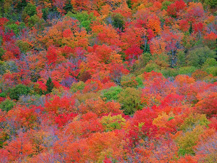 Red golden autumn fall trees autumn leaves autumn forest photos