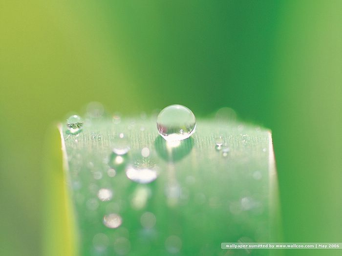 dewdrops on green leaves - dewdrops Photos4 - Wallcoo.