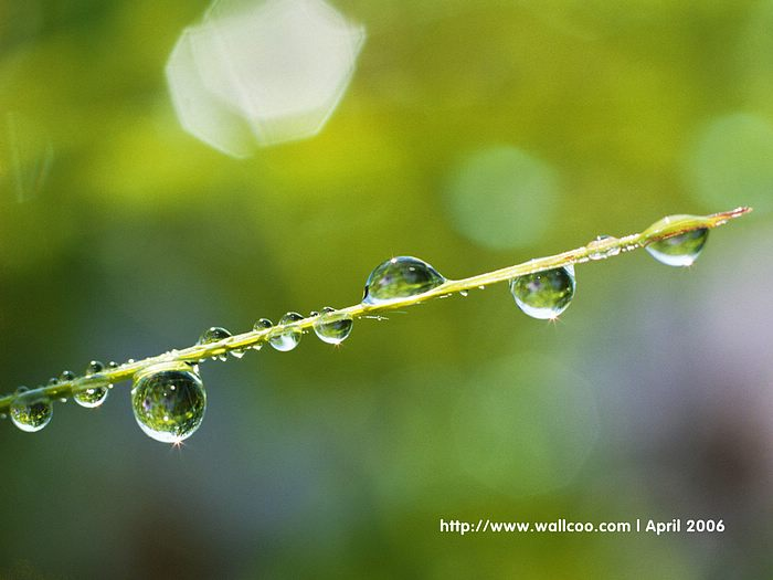 Water Drops on Leaves - dewdrops Leaves Spring Wallpaper17 - Wallcoo.