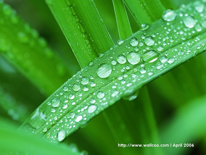Water Drops on Leaves - dewdrops Leaves Spring Wallpaper18 - Wallcoo.