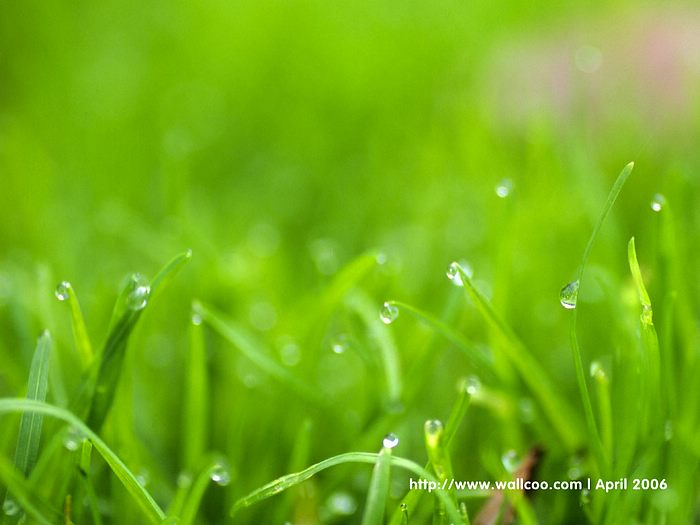dewdrops pictures dewdrops green leaves wallpaper22