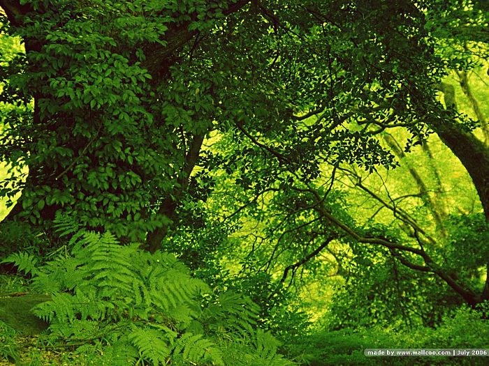 lush green forest wallpaper - photo #14