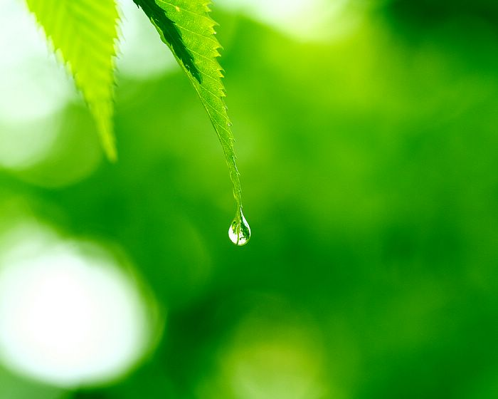 Dew drop hanging on leaf wallpaper - dewdrop on a leaf wallpaper2