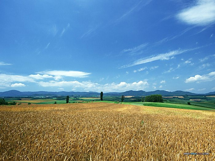 sceneries wallpapers. field Scenery wallpapers,