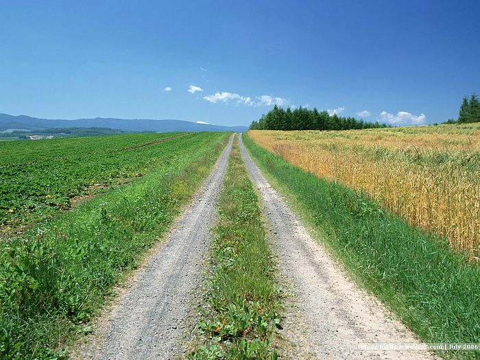 Country Road Scene Wallpapers12