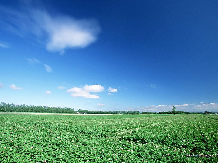 Perfect country field under blue sky - vast country field, blue sky,