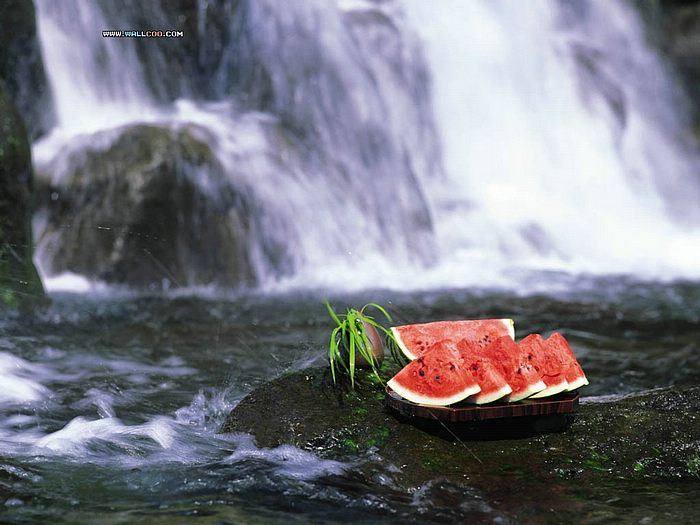 Summer Nature Photography