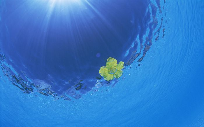 Hawaii Photo: Sun Light Underwater, Sunshine and Blue sea water