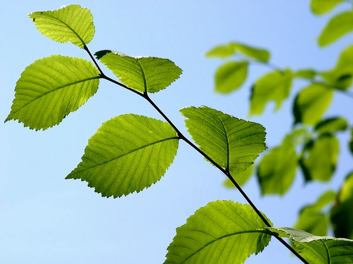 Leaves of plants - photo#13
