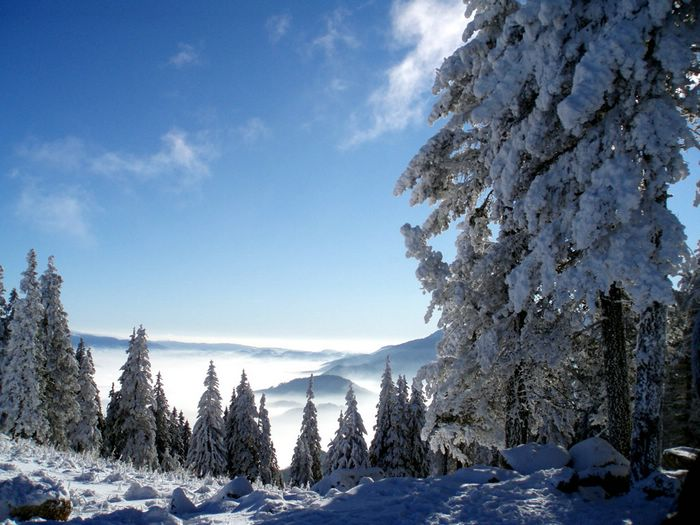 Snow covered trees snowy landscapes wallpaper11 wallcoo winter dreams winter paradise scene wallpaper snow covered trees snowy landscapes wallpaper11 voltagebd Image collections