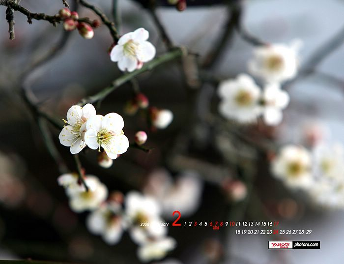 free spring wallpapers for desktop. Yahoo Korea - February Desktop
