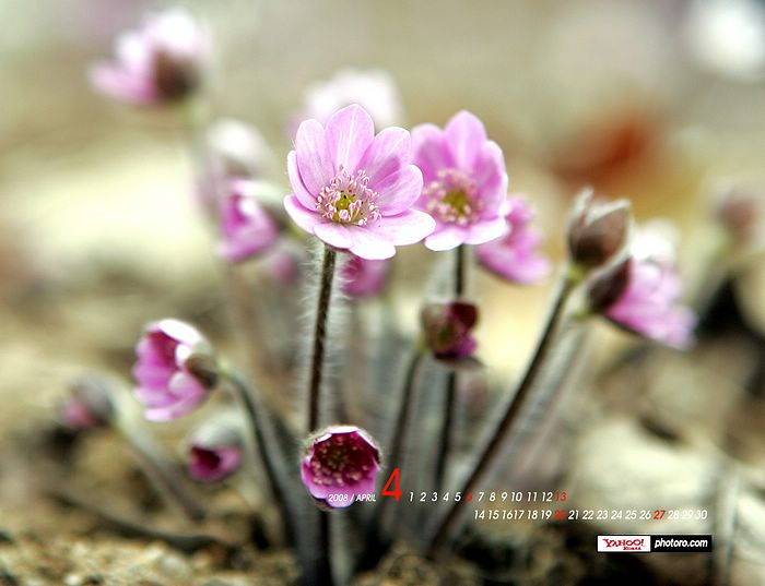 spring wallpapers. Spring wallpapers,