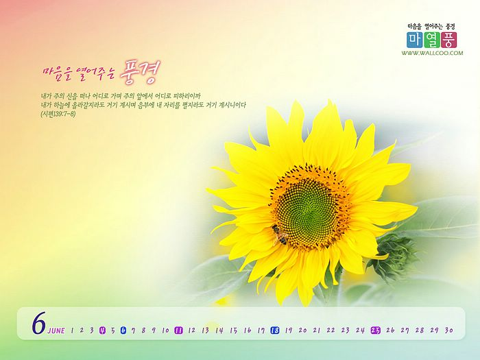... Calendar Wallpapers (Vol.2):May Calendar - romantic flowers wallpaper