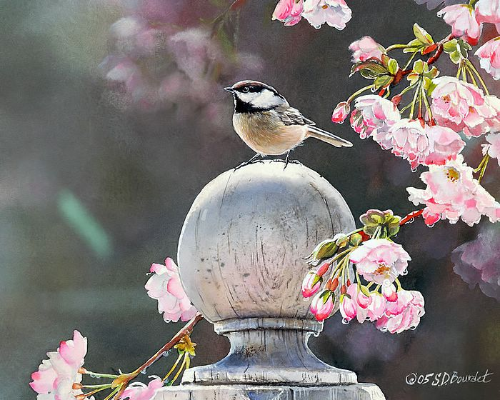 birds wallpapers. Chickadee Bird Wallpapers,