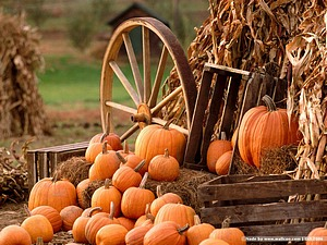 Pumpkin Display  Wallpaper - Horse wagon with Pumpkins and Hay  1024*768