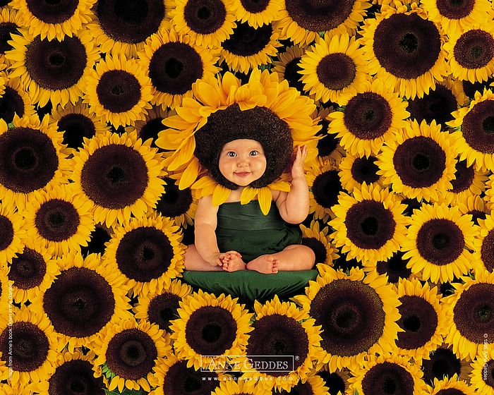 wallpapers Anne Geddes