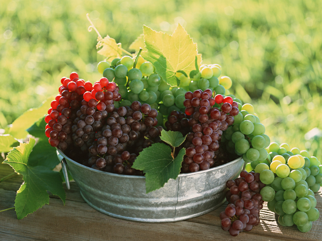 fruit photography grapes fresh grapes in vineyard