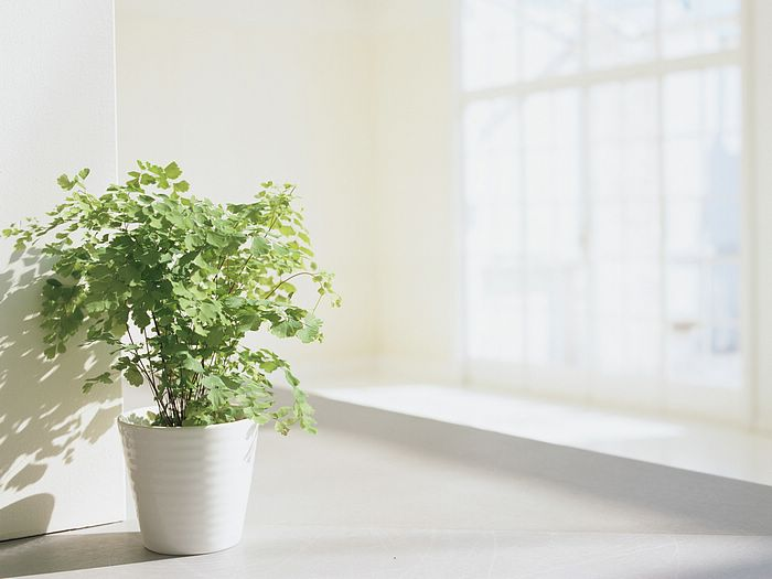 potted plant in living room, elegant interior decorations 4