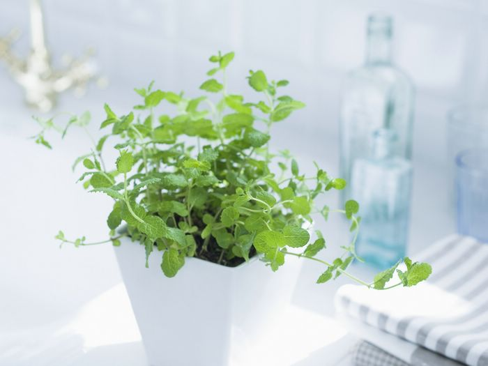 Pot Mint, Interior decorating plants wallpaper 1920*1600 6